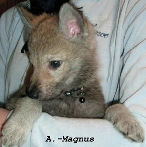 A.-Magnus the Wolf I. Lord of Lasvegas