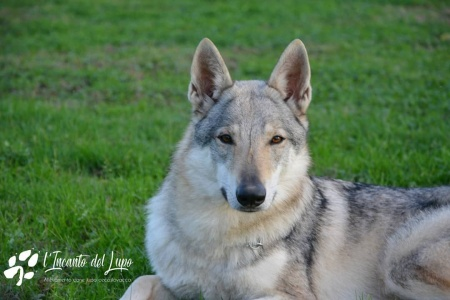 Iordis Wild Instinct Kennel