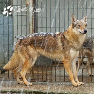 Nytros Wild Instinct Kennel